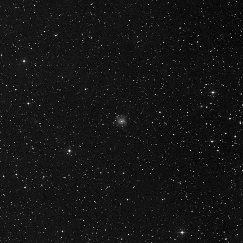 Image of NGC 7080 - Spiral Galaxy in Pegasus star