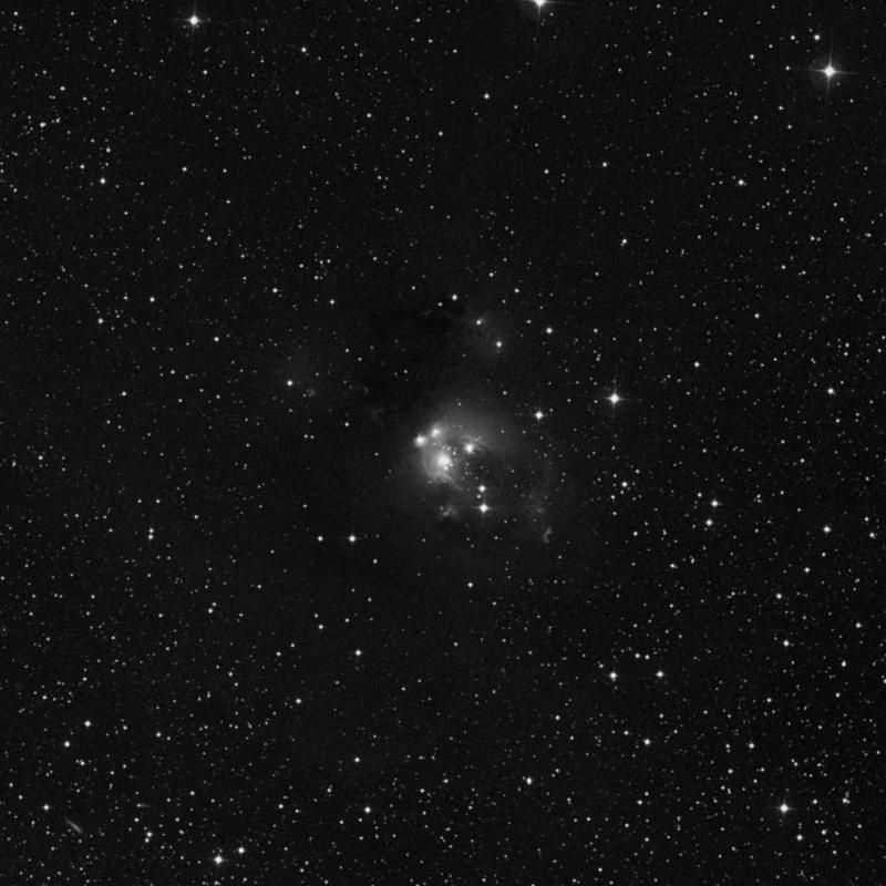 Image of NGC 7129 - Star Cluster + Nebula star