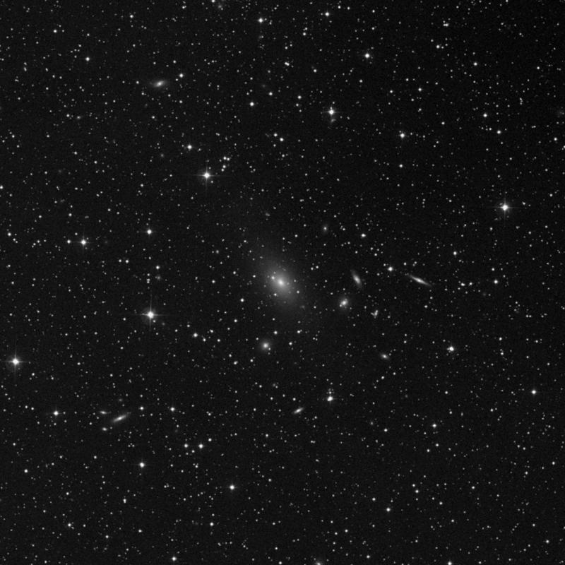 Image of NGC 7242 NED01 - Elliptical Galaxy in Lacerta star
