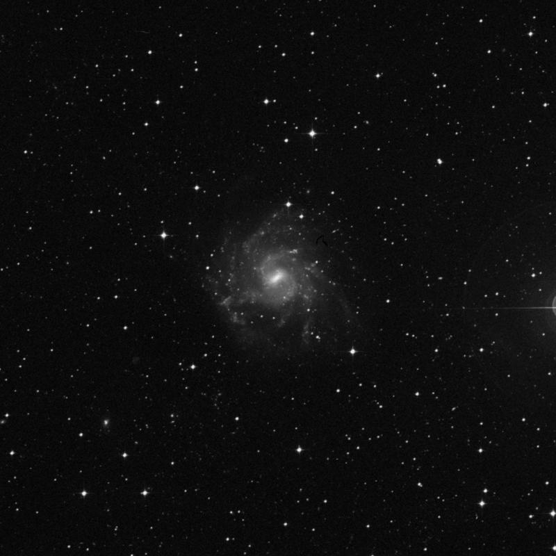 Image of NGC 7424 - Spiral Galaxy in Grus star