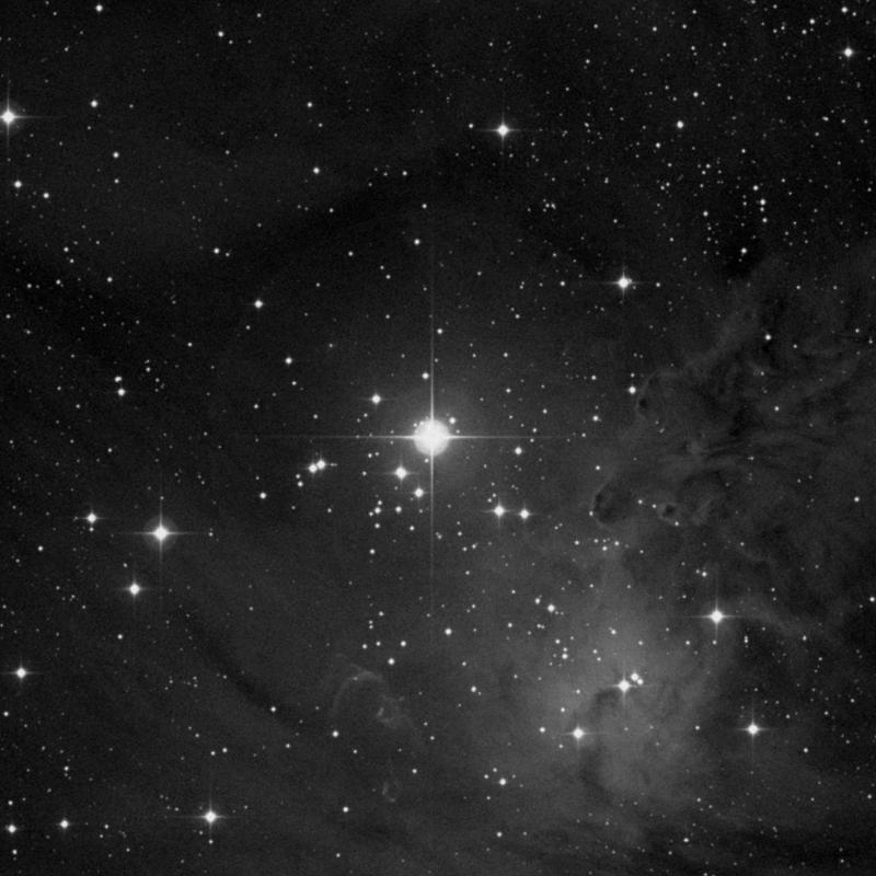 Image of NGC 2264 (Christmas Tree Cluster) - Star Cluster + Nebula in Monoceros star