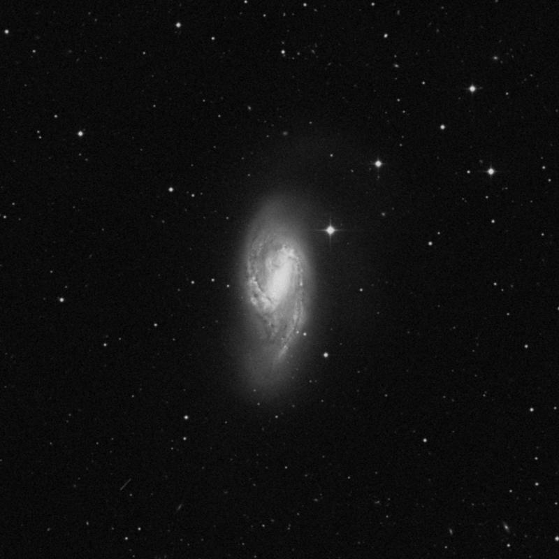 Image of Messier 66 (Leo Triplet) - Spiral Galaxy in Leo star