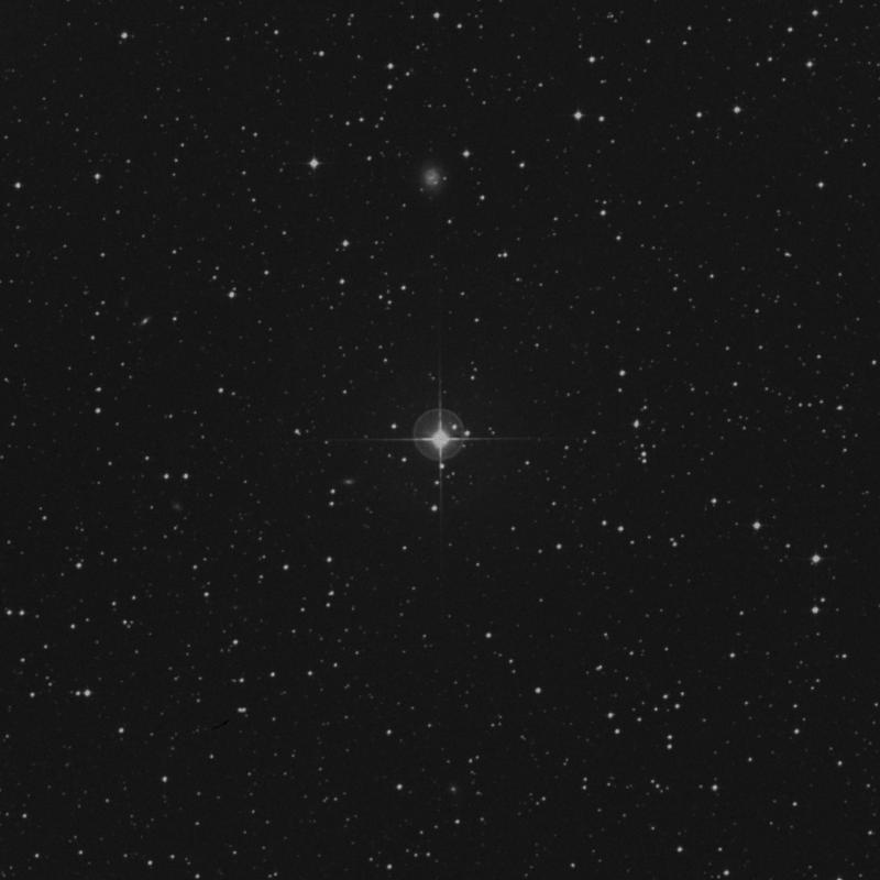 Image of κ1 Sagittarii (kappa1 Sagittarii) star